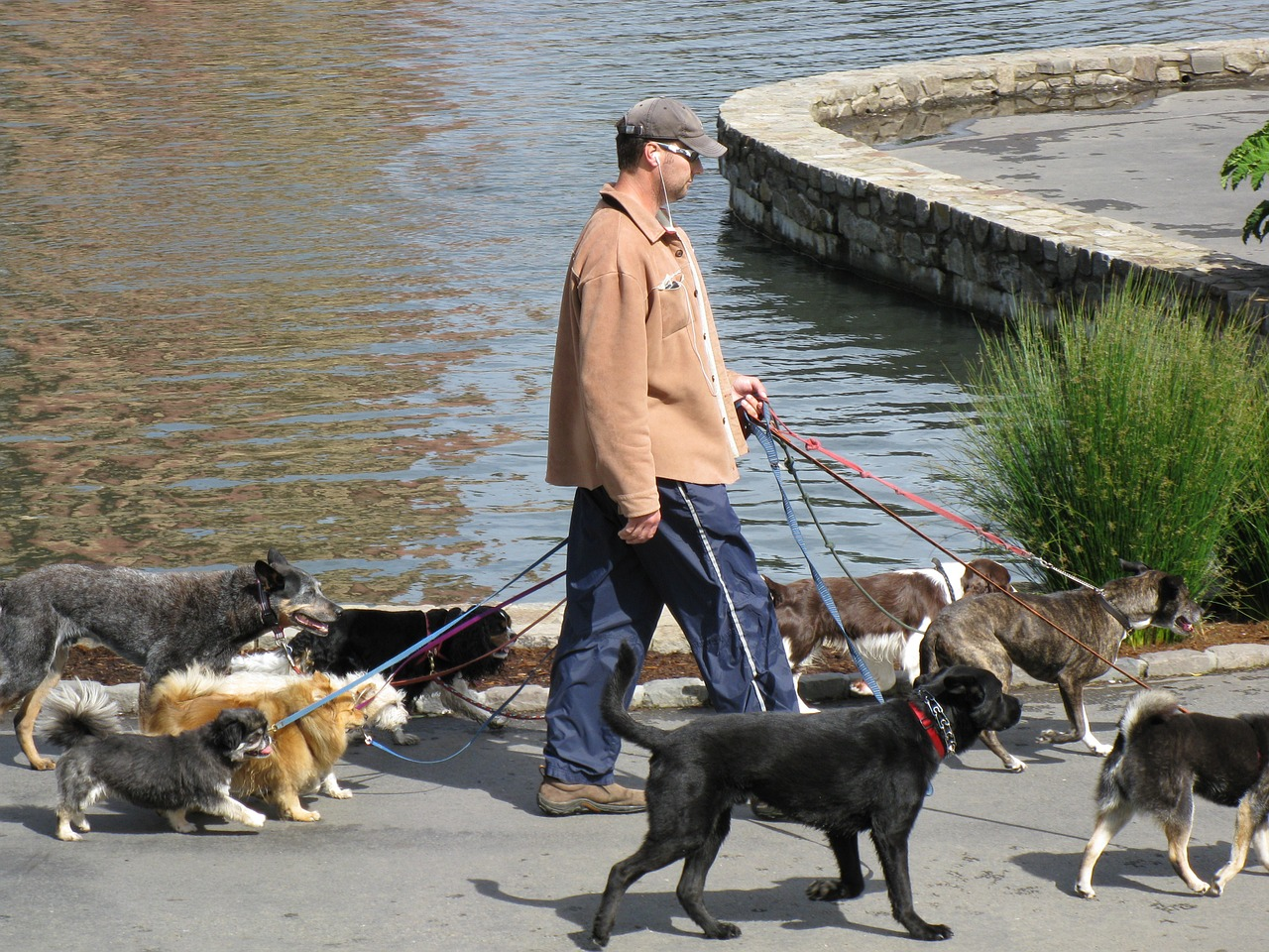 מיתוג מאלפי כלבים